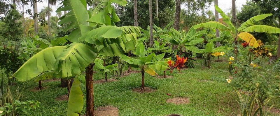 Permakultur Paraguay