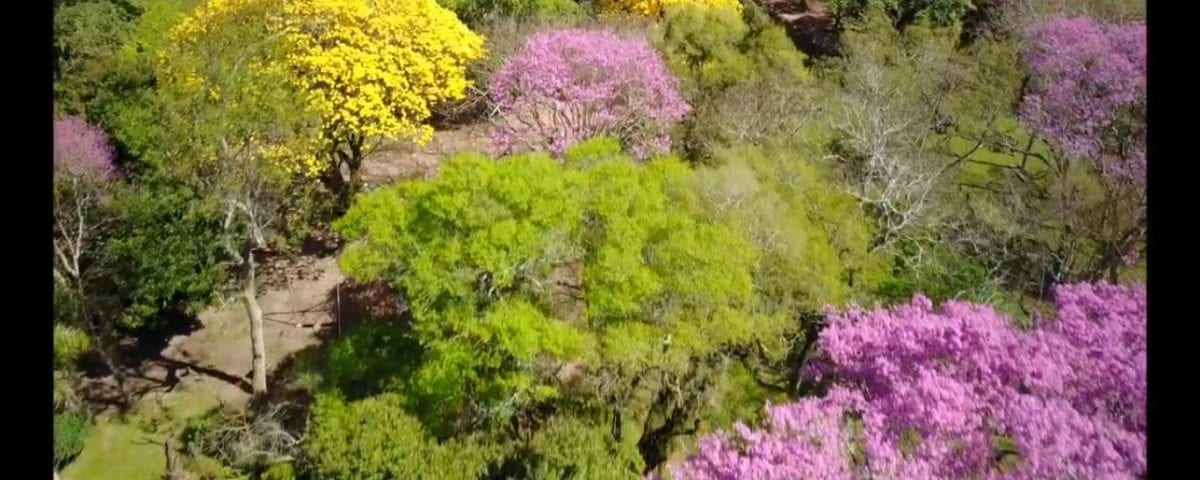 Paraiso Verde Image